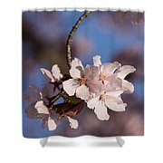 Pink Spring - Sunlit Blossoms And Blue Sky - Vertical Shower Curtain