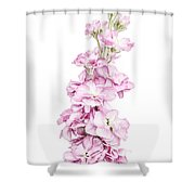 Pink Stock Shower Curtain