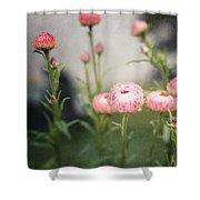 Pink Straw Flowers After A Light Rain Shower Curtain