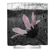 Pink Sunflower Shower Curtain