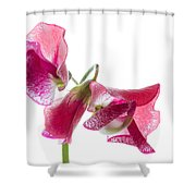 Pink Sweet Pea 2 Shower Curtain