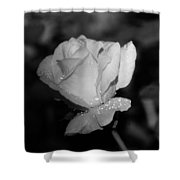 Pink Tea Rose 02 - Infrared Shower Curtain