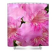 Pink Thunbergia Shower Curtain