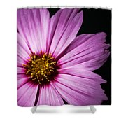 Pink Tickseed  Shower Curtain