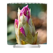 Pink Tip Shower Curtain