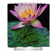 Pink Tipped Beauty Shower Curtain