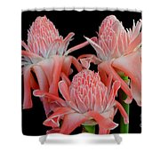 Pink Torch Ginger Trio On Black Shower Curtain