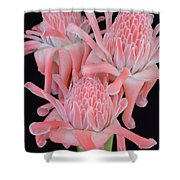 Pink Torch Ginger Trio On Black - No 2 Shower Curtain