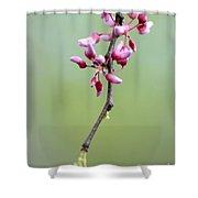 Pink Tree Flower Buds Shower Curtain