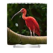 Pink Tropical Bird Shower Curtain