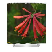 Pink Tube Flower Shower Curtain