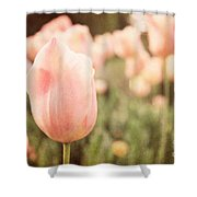 Pink Tulip Field Shower Curtain