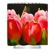 Pink Tulips In A Row Shower Curtain