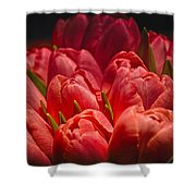 Fucshia Tulips Shower Curtain