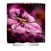 Pink Violet Glory Shower Curtain