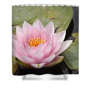 Pink Water Lily And Leaves Shower Curtain