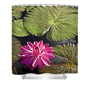 Pink Water Lily II Shower Curtain