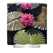 Pink Water Lily IIi Shower Curtain by Heiko Koehrer-Wagner