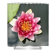Pink Waterlily And Cloud Reflection Shower Curtain