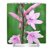 Pink Watsona  Shower Curtain