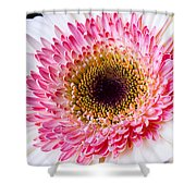 Pink White Daisy Shower Curtain