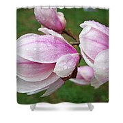 Pink White Wet Raindrops Magnolia Flowers Shower Curtain