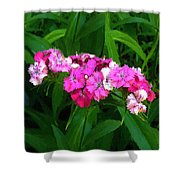 Pink Willie Shower Curtain
