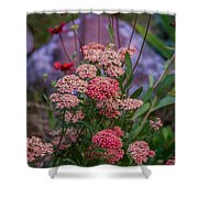 Pink Yarrow Shower Curtain