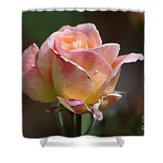 Pink Yellow Rose 01 Shower Curtain