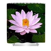 Pinkish Lotus Flower Shower Curtain
