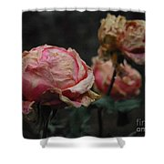 Pink Roses In The First Snow I V Shower Curtain