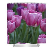 Pinks And Purples Shower Curtain
