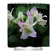 Pinky White Bougainvillea Shower Curtain