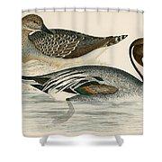 Pintail Duck Shower Curtain