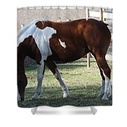 Pinto Shower Curtain