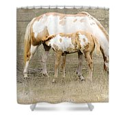Pinto Mare And Filly Shower Curtain