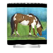 Pinto Mustang Horse Mare Farm Ranch Animal Art Shower Curtain