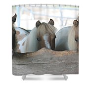 Pinto Party Shower Curtain