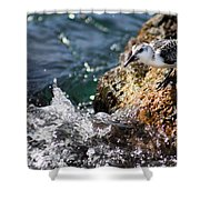 Piper 3 Shower Curtain