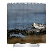 Piper Shower Curtain