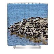 Pipers At The Bar Shower Curtain