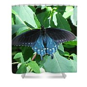Pipevine Swallowtail Shower Curtain