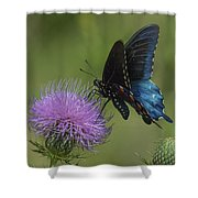 Pipevine Swallowtail Visiting Field Thistle Din158 Shower Curtain