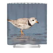 Piping Plover I Shower Curtain