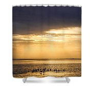 Pirates Gold Shower Curtain