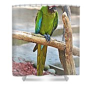 Pirate's Pal Shower Curtain