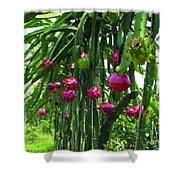 Pitaya Fruit Trees Shower Curtain
