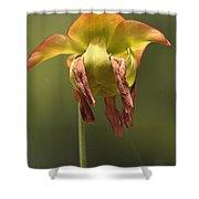 Pitcher Plant Flower Shower Curtain