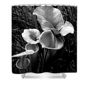 Pitcher Plants Shower Curtain