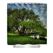 Pithers Willow Shower Curtain
